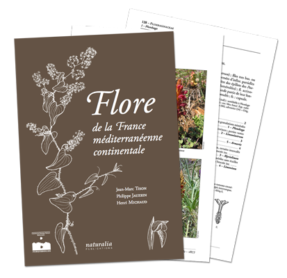 https://www.floremed.com/catalog/view/theme/default/image/flore300.png
